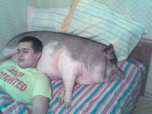 boy sleeping with his head on a sleeping pig